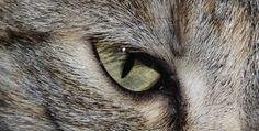 cat cat 4