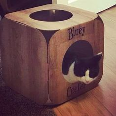 Yay!  we are so pleased they like their pod  what a cutie pie!  thank you so much!  #cat #catsofinstagram #cats_of_instagram #catfurnature #catfurniture #catsinboxes #cattoy #INSTACAT_MEOWS #cutecat #PurrMachine #catsinboxes #catbox #Excellent_Cats #BestMeow #dailykittymail #thecatniptimes #catcube #catpod #ArchNemesis #FlyingArchNemesis #myindoorpaws #ififitsisits #cutecatcrew #catchalet #catnip #themeowdaily #kitty #dailykittymail #catgrass