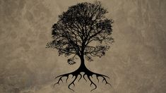 the tree of life wallpaper tree of life quotes
