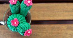 MaryJ Handmade: E' primavera e da Minerva fioriscono i cactus...