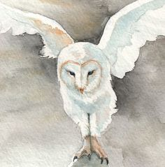 """Out of the Dark - Barn Owl (zoom)"" par Katie Grider"