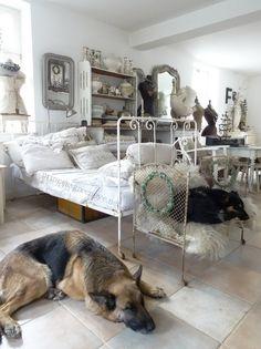 My dream space - complete with German shepherd!