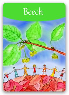 Check out the Bach Flower Cards - all 38 cards are unique illustrations by Susanne Winberg. Bach Flowers, Online Cards, The Ancient One, Flowers Online, Oracle Cards, Illustrations, Flower Cards, Flower Power, Remedies