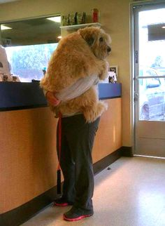 Frightened dog at vet seeks comfort.