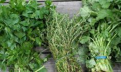 Η Υγεία, ο Έρωτας καί η Ψυχική Υγεία: Το ελληνικό βότανο που προστατεύει από καρκίνο και...