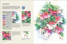 flowers-in-watercolour-by-wendy-tait-04 Watercolor Books, Watercolor Mixing, Watercolor Disney, Watercolor Cards, Watercolor Flowers, Watercolor Paintings, Beautiful Paintings Of Flowers, Outline Drawings, Painted Books