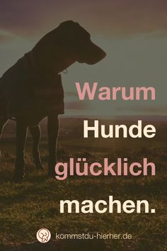Hunde machen glücklich –wenn man es zulässt. Leben mit Hund   Hundeleben #Hundeerziehung #Hund #Gassigehen Tricks, Movies, Movie Posters, Dogs, Dog Nutrition, Puppys, Animales, Bestfriends, Films