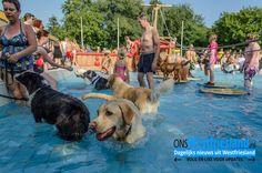 Honden zwemmen in zwembad De Wijzend in Zwaag