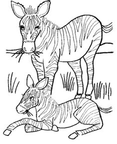 wild animal coloring pages mother and baby zebra coloring page zebra coloring page