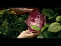 Eedenistä pohjoiseen -elokuvan trailer