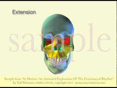 Skull Craniosacral Rhythmic Motion by Tad Wanveer