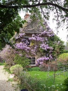 England Travel Inspiration - A cottage covered in wisteria --May in Shrivenham, Oxfordshire