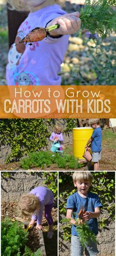 Learn how to grow carrots with kids and see how easy gardening with kids is! All it takes is some patience, sun, water, and love.  via @acraftyspoonful