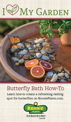 DIY Butterfly Bath