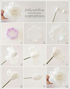 instructions on carnation sugar craft,  Go To www.likegossip.com to get more Gossip News!