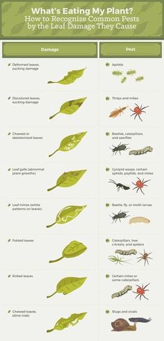 So useful! What's eating my plants? How to recoqnize common pests by the leaf damage they cause.