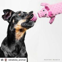 Has participado ya en nuestro súper concurso de #fotografía y besos? @retratista_animal ya lo ha hecho con su especialidad: retratar a animales! Participa tú también con el HT #besophotoexperience y gana un 4Pack de microcursos en #WorkshopExperience Podrás apuntarte al microcurso de Santos Román sobre Fotografía de mascotas PARTICIPA! #fotografia #concursos #fotografiademascotas #kissphoto #SantosRoman #escueladefotografia