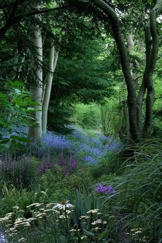 Druids Trees:  Wildflower forest, Wisconsin, USA.