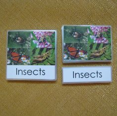 Set of beautiful 3 part cards - Insects - Montessori material - 3 Mil lamination does not extend beyond edges. $30.00, via Etsy.