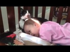 Animals Trying play with Baby