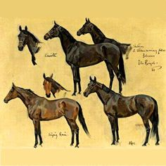 Buy online, view images and see past prices for PETER BIEGEL. Invaluable is the world's largest marketplace for art, antiques, and collectibles. Horse Drawings, Animal Drawings, Art Drawings, Drawing Art, Art And Illustration, Horse Artwork, Horse Paintings, Horse Portrait, Pencil Portrait