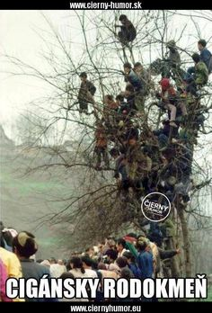 The people tree Good Humor, Crazy People, Best Part Of Me, Im Not Perfect, Haha, Funny Pictures, Images, Motto, Climbing