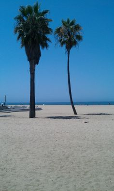 This was Friday August 10, 2012 in Venice Beach, CA.  The first picture I took.  The previous time I was in Venice Beach was 2002.  #VeniceBeach #PalmTrees