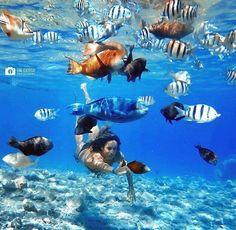 Elmog Beach, Red Sea, Eilat.
