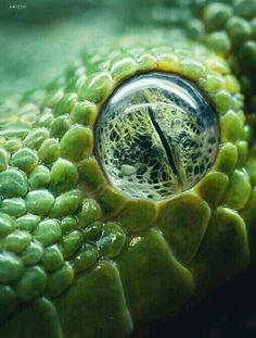 Viper eye