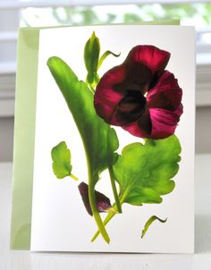 Purple Pansy fine art card for Mother's Day, by Julia McLemore.