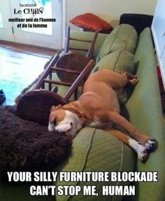 OMG now I have to wonder if my dog does this  ROFL