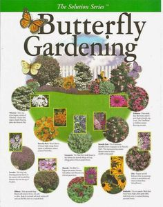Butterfly Gardening Plan - create your own garden with this key map filled with the right plant combinations that attract butterflies Potager Bio, Hummingbird Garden, Lawn And Garden, Terrace Garden, Garden Hammock, Moss Garden, Garden Table, Garden Spaces, Spring Garden