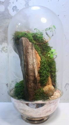 steep ravine ~ where can I find a nice piece of old wood like this, that will fit in a jar...?