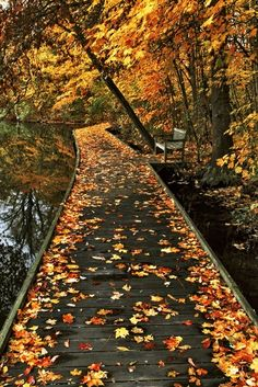 I wonder if this long wooden bridge leads to hidden campsite or cabin in the colorful woods?