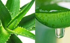 Is Aloe Vera Juice Good For You? #paleo #food #recipes