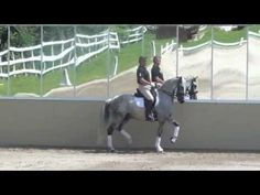 Casa Lusitana- click and go to youtube for a video of reinback in trot.  amazing..