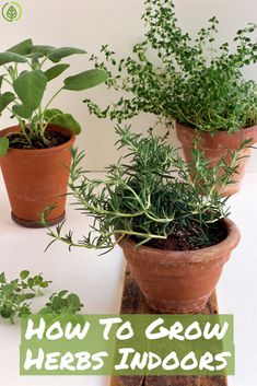 Here's what you need in order to grow your very own herbs indoors!
