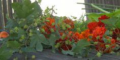 FARVEVITAMINER I EN GLØDENDE SENSOMMERBUKET - A late summer-bouquet