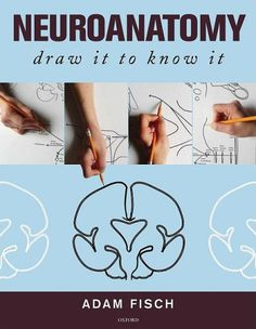 the best way to learn neuroanatomy!... After you draw it... color it.