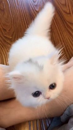 Cute Baby Cats, Cute Cats And Kittens, Cute Little Animals, Kittens Cutest, Cute Dogs, Beautiful Kittens, Animals Beautiful, Best Cat Gifs, Funny Animals