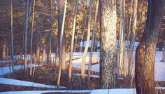 Spring Warmth Oil on Canvas, by Peter Rotter Oil Painters, Winter Trees, Canadian Artists, Landscape Paintings, Landscapes, Oil On Canvas, Sketches, Fine Art, Abstract