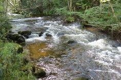 Le Couzon, rivière du Forez