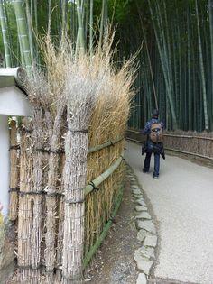 Бамбуковый лес Сагано в Киото, Япония
