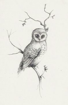 As you can probably tell by now..... I would like to get an owl tattoo. My first and possibly only one(: