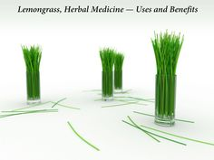 # Health Benefits of Lemongrass #  - Helps to cope with fever  - Helps to cope with cough and cold  - Helps to cope with stress  - Makes coping with high blood pressure easier  - It lowers the cholesterol level   - Cleanses other organs of our body including kidney, pancreas, liver, bladder etc.  - Helps to improve the digestive system  - Helps to improve blood circulation  - Helps to cope with excessive fats in body  - Helps to deal with menstrual problems