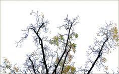 Letzte Blätter im November - Jahreszeiten - Galerie - Community