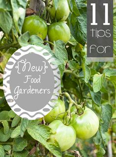 Great Information and tips for new or beginning food gardeners.  Helpful tricks and ideas for people new to gardening. Great gardening food tips
