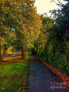 Chorley Photograph - Autumn Walk by Joan-Violet Stretch