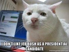 jeb bush memes - Google Search