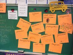 Neon Vocabulary Word Wall Grade 5